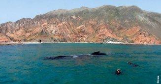 Oman Sud
