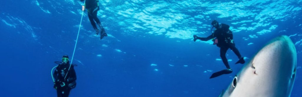 Sail Dive Açores