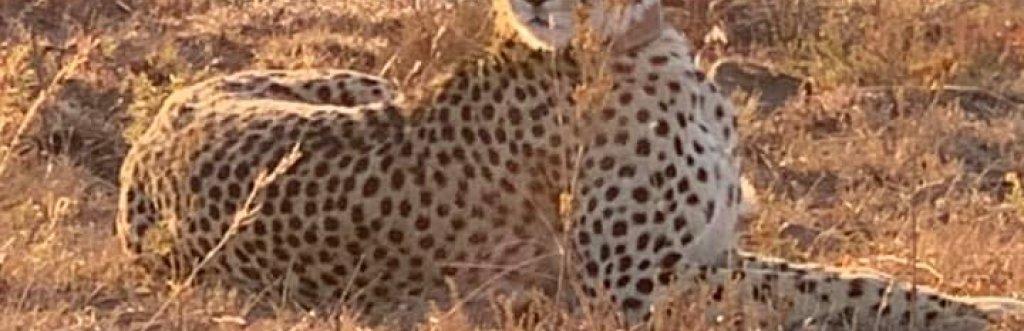 Extension Safari Animalier Afrique du Sud