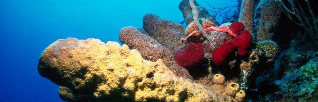 Bahamas Ile Andros