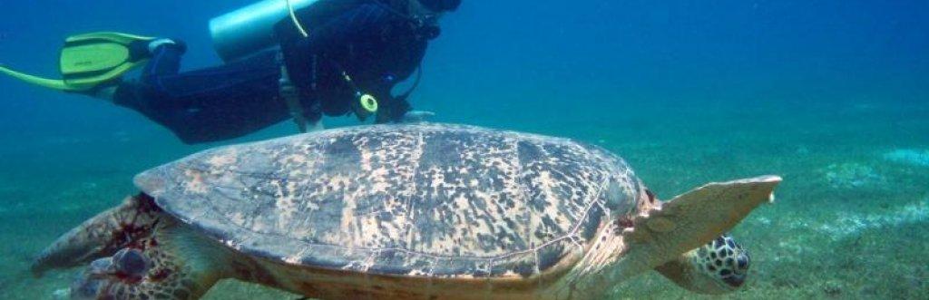 Où et quand plonger avec les tortues ?