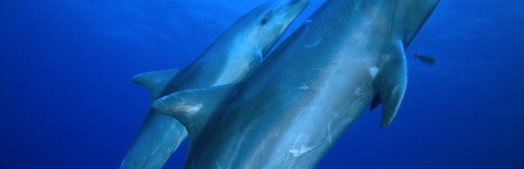 Où et quand plonger ou nager  avec les dauphins ?