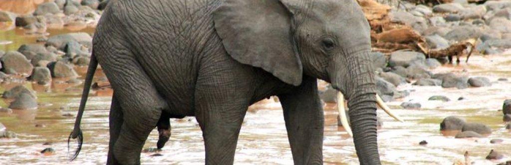 Extension Safari animalier Tanzanie